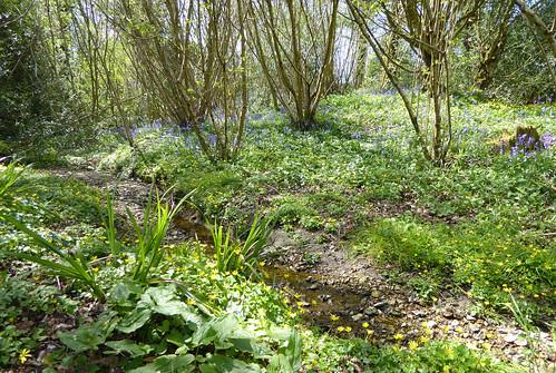 woodland 4