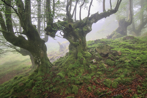 Parque Natural de #Gorbeia #Orozko #DePaseoConLarri #Flickr - -615