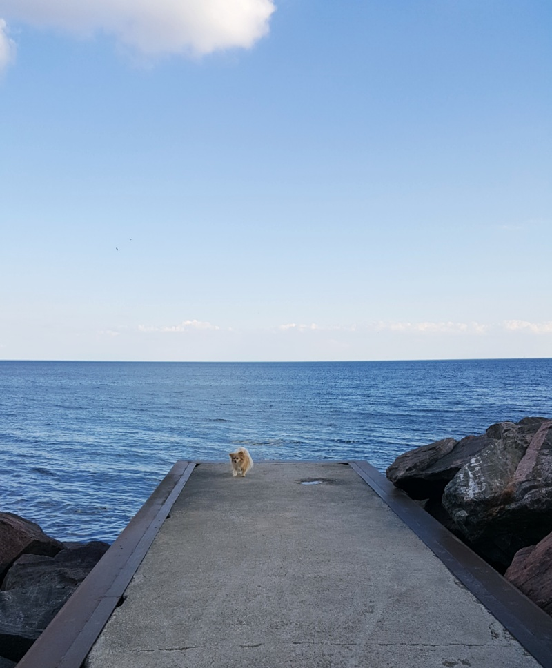 dog beach Toronto