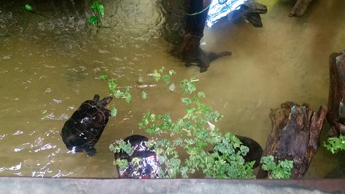 Woodland Park Zoo Turtles