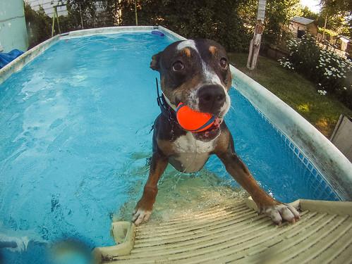 GoPro Pool-8685