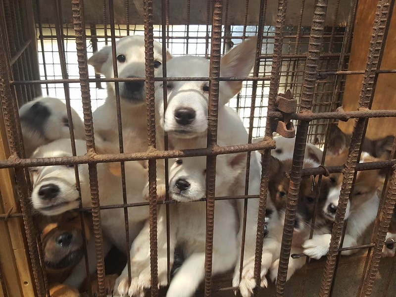 Nami Kim Team tries to shut down dog farm with 300 puppies in Bucheon