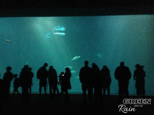 160703c Deep Sea _39