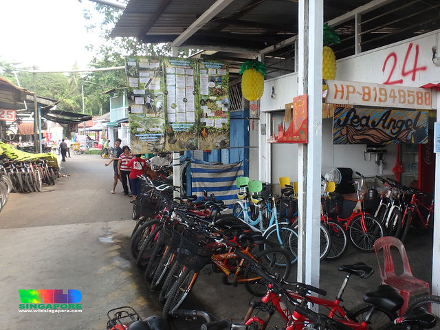 Restore Ubin Mangroves (R.U.M.) Initiative posters at Pulau Ubin Town