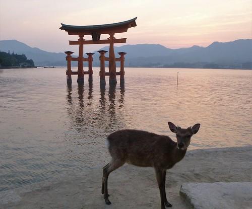 jp16-Myajima-Torii-coucher du soleil  (12)