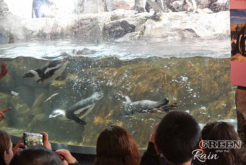 160703d Splash Zone and Penguins _13