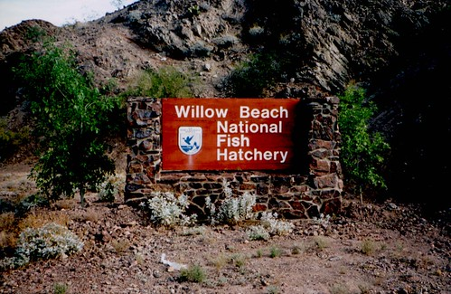Willow beach nfh az willow beach nfh arizona usfws for Willow beach fishing report