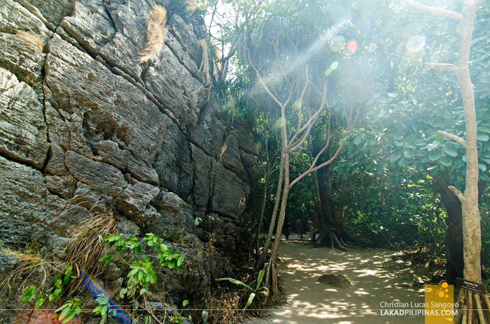 Koh Phi Phi Boat Tour Maya Bay Trail