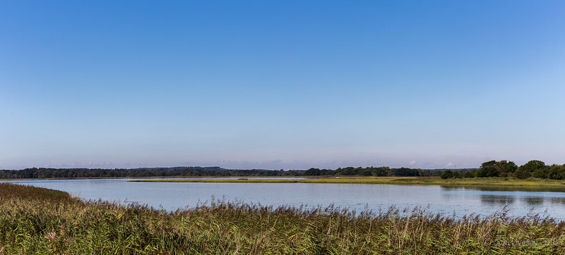 Lychett Bay on a still morning