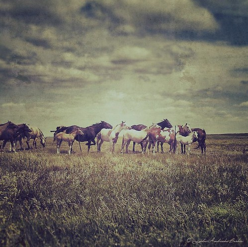 Wild Horses - South Dakota | by ShoelessLinda (aka HEMEEE)