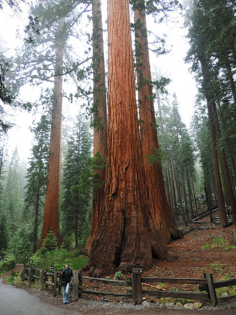 Mariposa Grove, Yosemite National Park, California