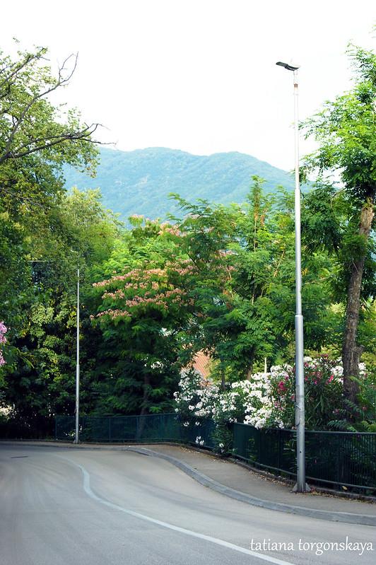 Дорога в Савине, Херцег Нови