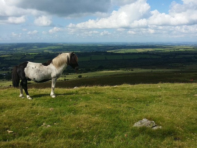 Pony and West Devon