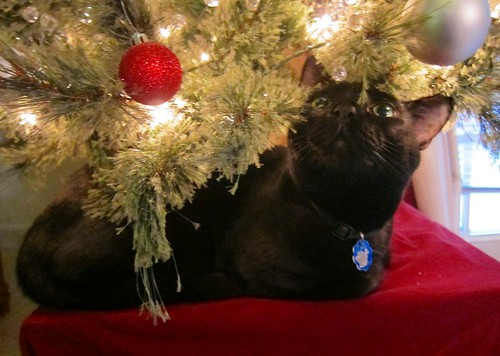 Nox & The Christmas Tree