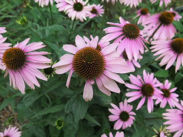 Botanic Garden Cambs