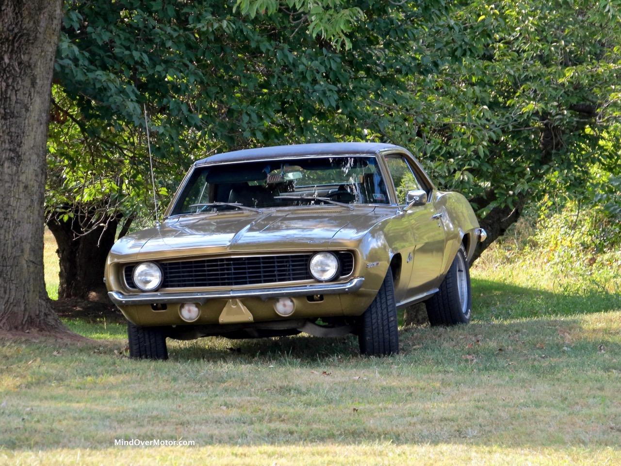 1969 Camaro Under a Tree
