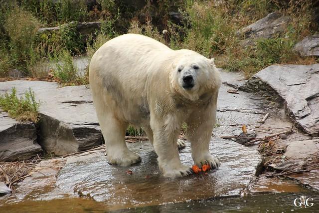 Besuch Tierpark Friedrichsfelde 20.07.201640