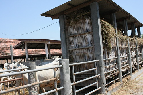Pasuruan Beef Cattle Research Station in Indonesia