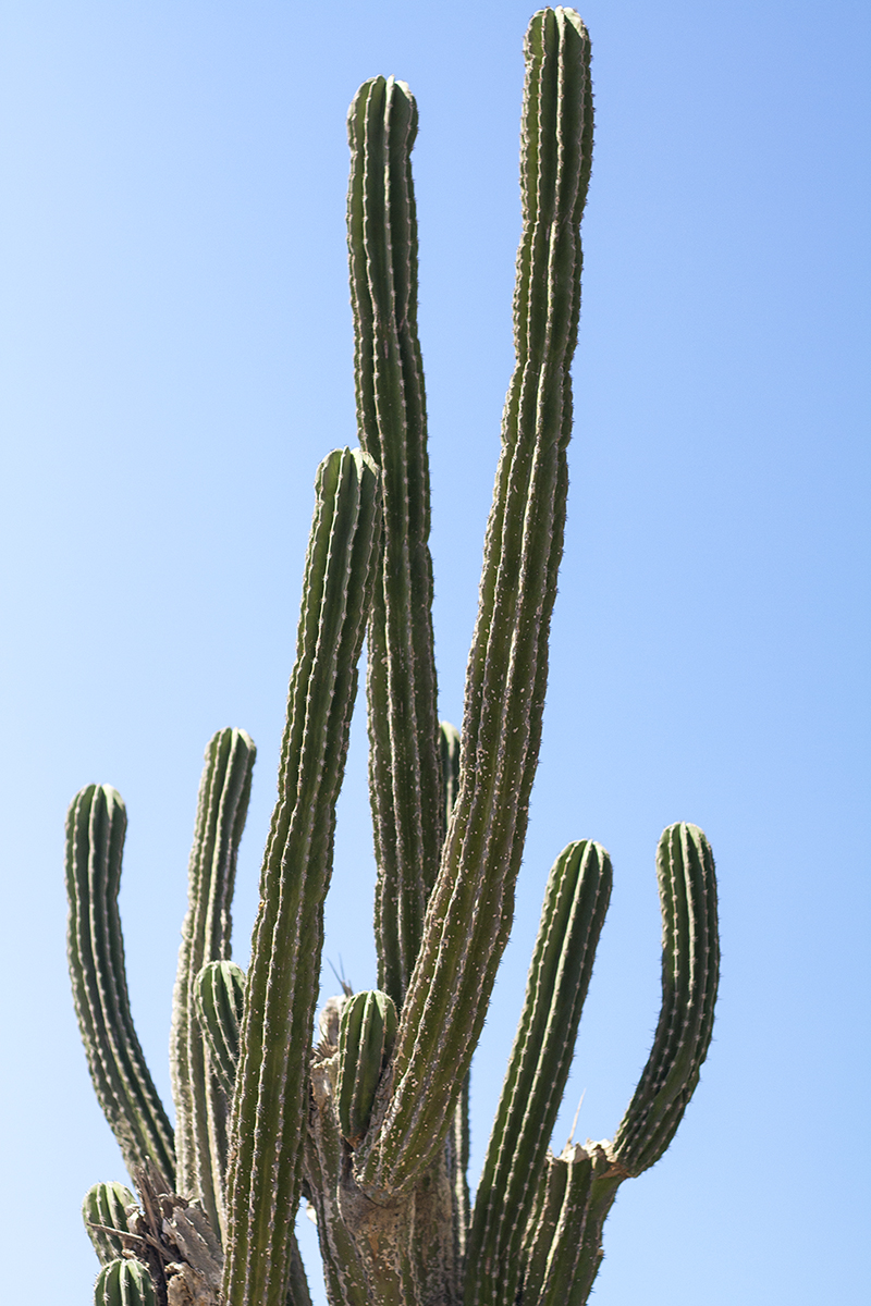 04cabo-mexico-cactus-travel