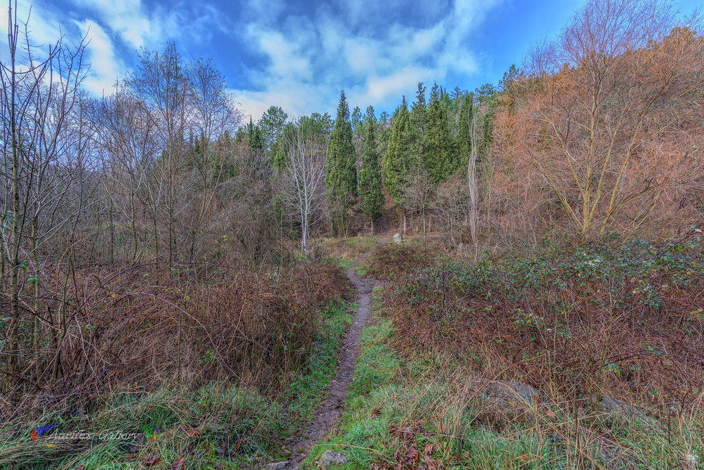 Woodland scenery in December