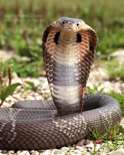 Schlangen/Snakes