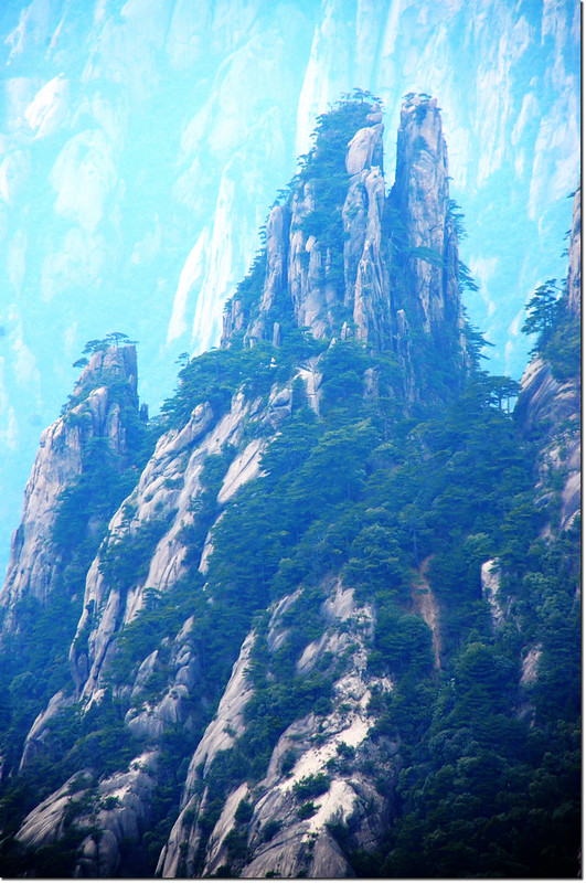 黃山的奇松怪石 4