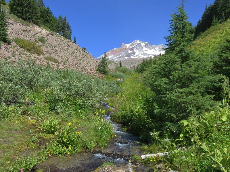 Mt. Hood from the Paradise Park Loop Trail at Lost Creek
