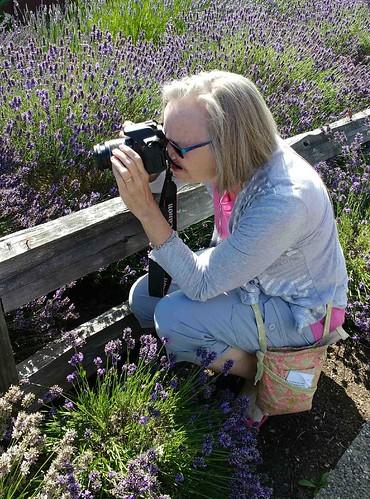 lavenderphotographer