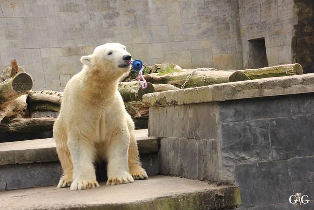 Zoo Rostock 1.Teil 20.08.201626