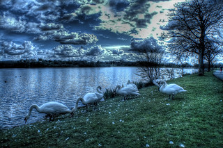 Swan View | by Billy McDonald