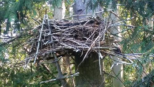 Woodland Park Zoo Eagle Nest