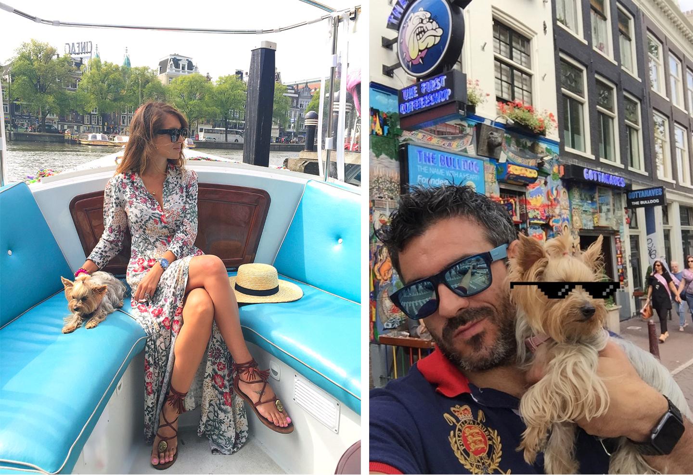 Amsterdam con Perro, Amsterdam con Mascotas amsterdam con perro - 29431764845 b68aa16552 o - Visitar Amsterdam con perro