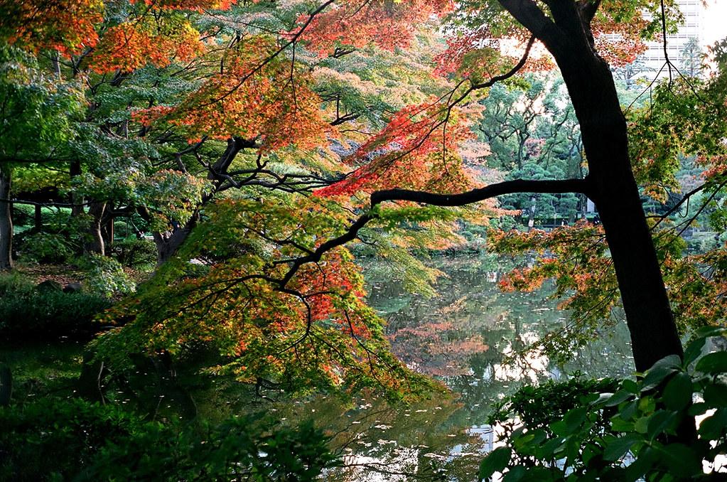 Rollei35_Hibiya_20121124_14