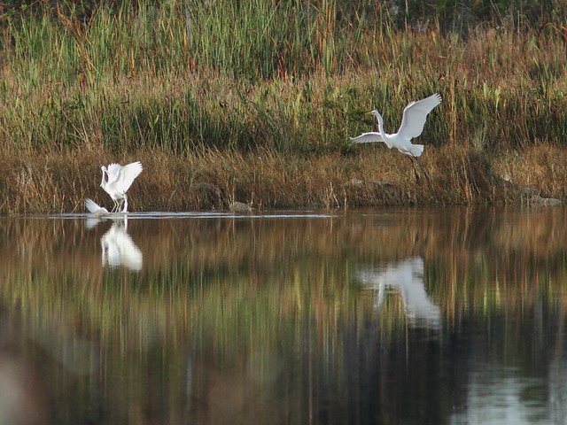 Heron encounter 1 20121217
