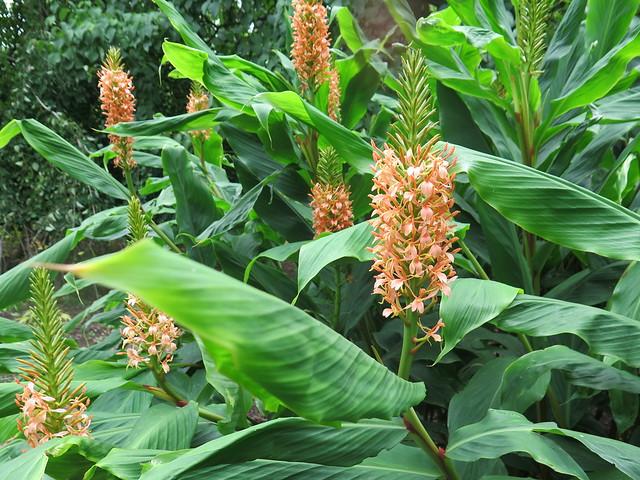 Cambs Botanic Garden