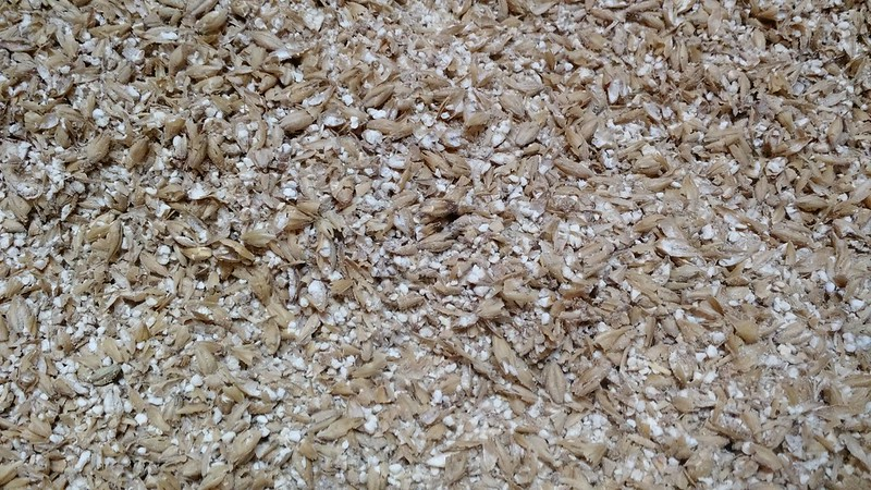 crushed-barley-malt