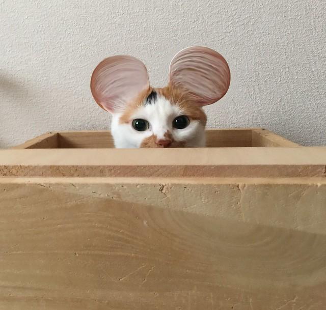 #cat #cats #catsofinstagram #catstagram #instacat #instagramcats #cymera #nekostagram #猫 #ねこ #ネコ ネコ部 #猫部 #ぬこ #にゃんこ #サイメラ #三毛猫