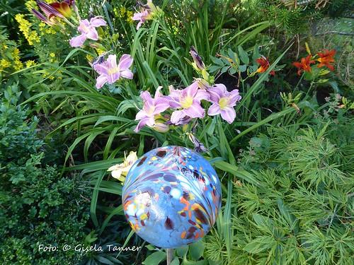 Taglilien in meinem Garten
