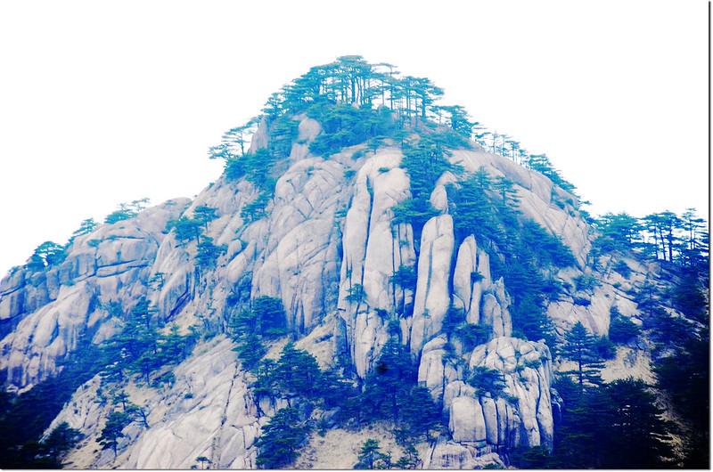 黃山的奇松怪石 2