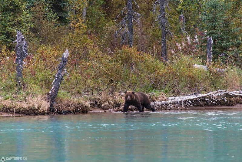 Searching the Salmon - Lake Clark National Park