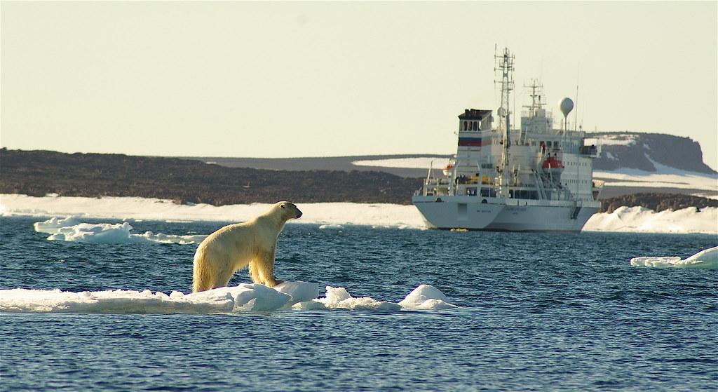 Polar bears 051