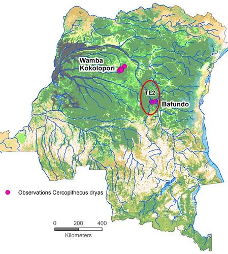C dryas distribution