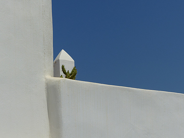 cactus sur ciel bleu