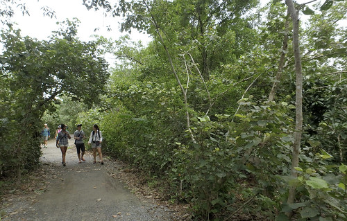 FREE mangrove walk with the Restore Ubin Mangroves (R.U.M.) Initiative