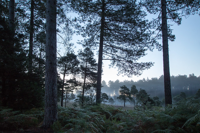 The Forest before Sunrise