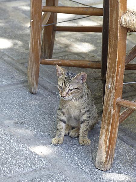 chat du dioskouroi