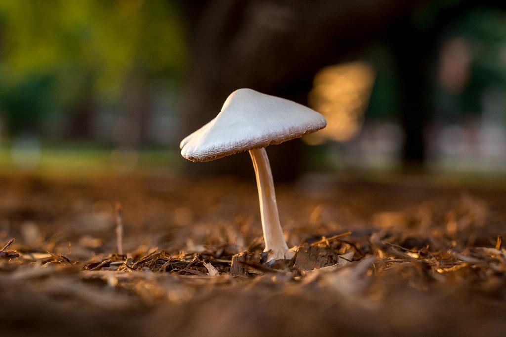 Trust the Fungus