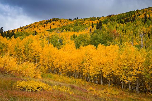 Mesa Creek Colors