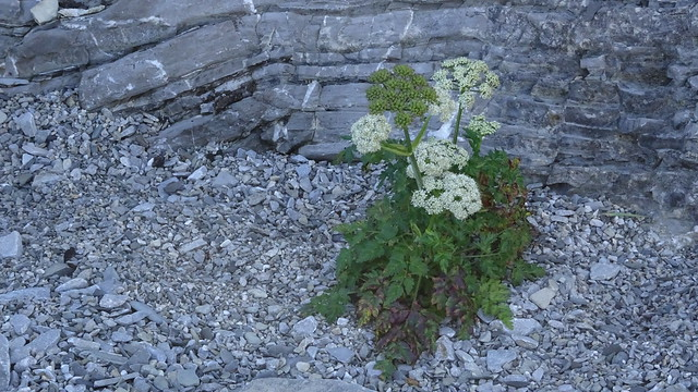 Flowers Grow in Inhospitable Places