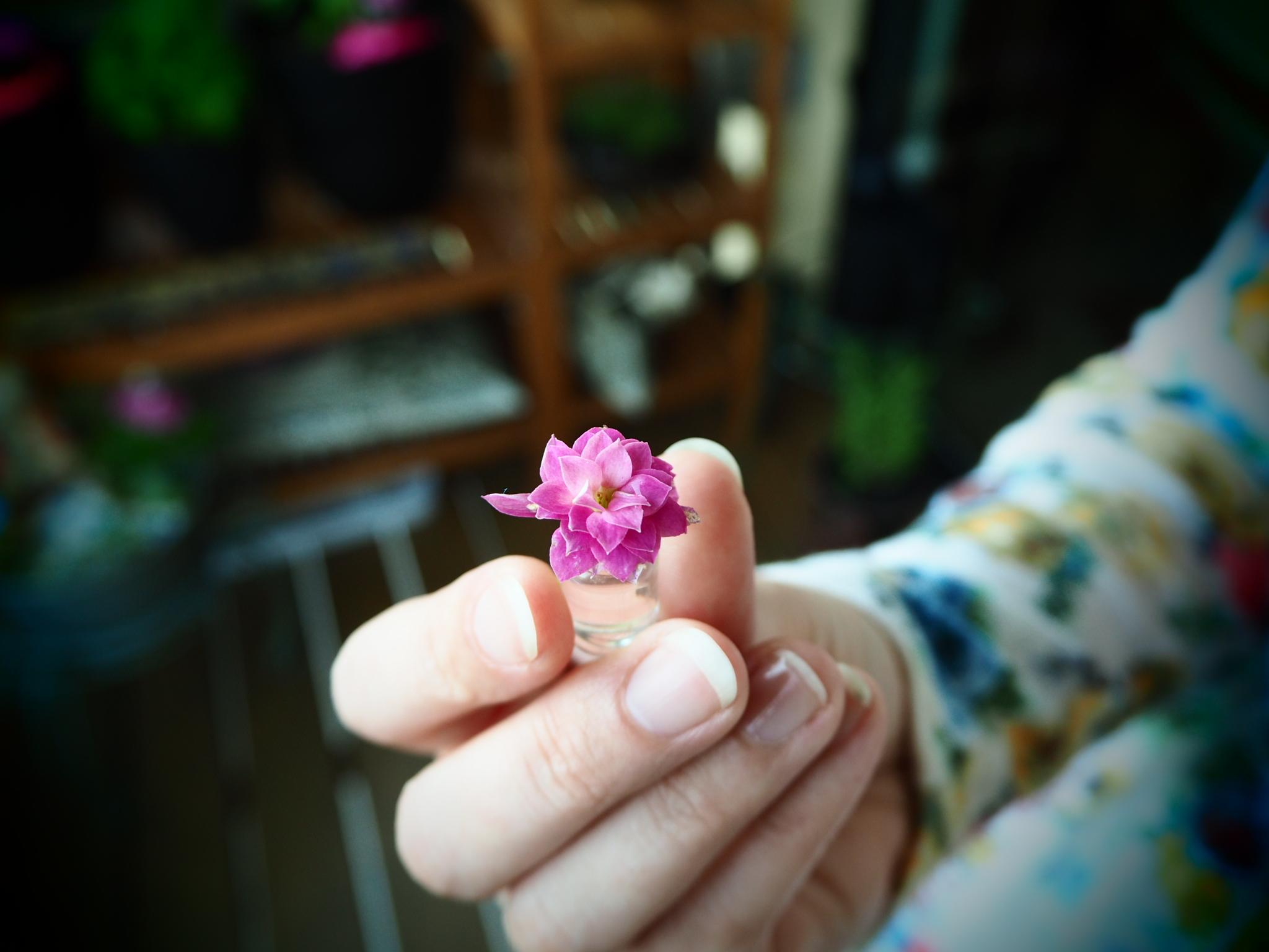 Flora Miniatura.